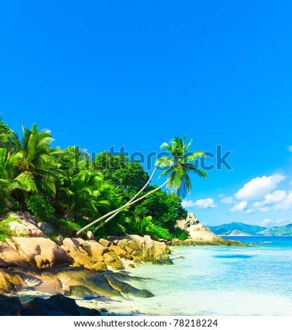 Coconut Dream Palms - stock photo