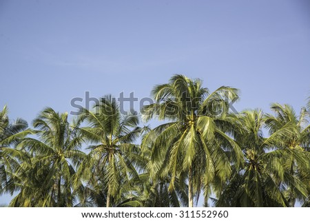 Coconut farm in Southern of Thailand.
