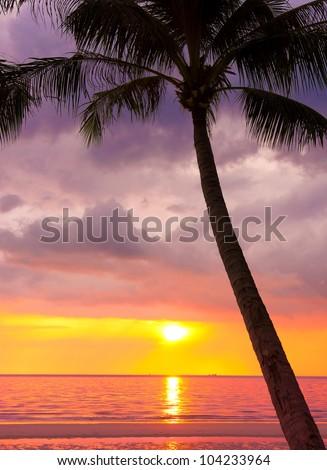 Coconut Horizon Fiery Backdrop - stock photo