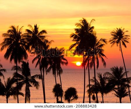 Coconut Horizon Tree Silhouettes  - stock photo