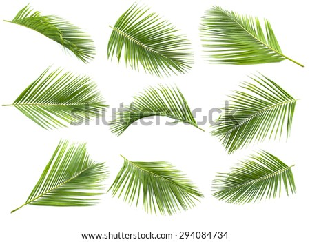 coconut leaf - stock photo