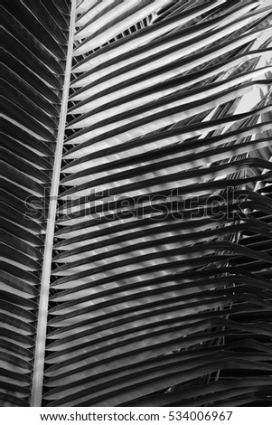 Coconut leaf B&W
