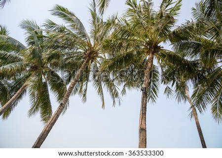 coconut leaf on blue sky