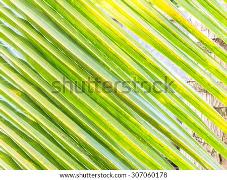 coconut leaf texture background stock photo