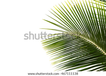Coconut leaves isolated on white background