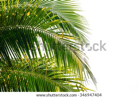 Coconut leaves on a white background - stock photo