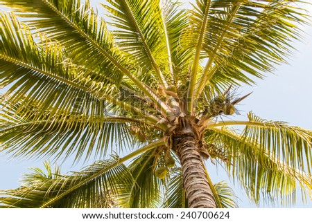 Coconut palm against blue sky, tropical background. - stock photo