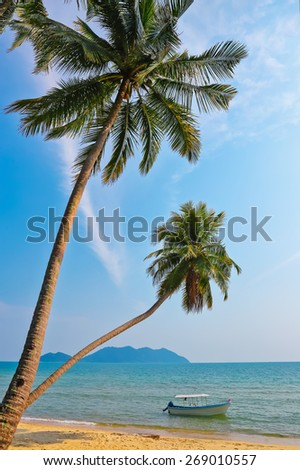 Coconut palm and boat on a tropical sandy beach