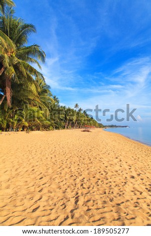 Coconut palm and Tropical beach