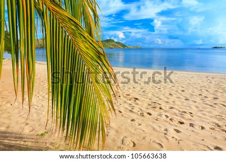 Coconut palm branch on the tropical beach - stock photo