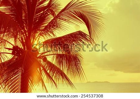 coconut palm in sunsat  - stock photo