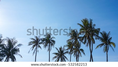 Coconut palm / Ly Son island,Quang Ngai,Viet Nam 7/2014