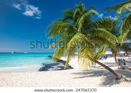 Coconut palm on caribbean beach, Cancun, Mexico - stock photo