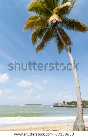 Coconut palm on the caribbean beach. Dominican republic