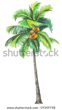 Coconut palm - the most known palm tree in the World