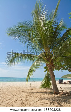 Coconut palm tree and cleaned sea beach under blue sky