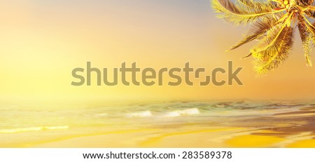 Coconut palm tree and ocean. Tropical beach background. - stock photo