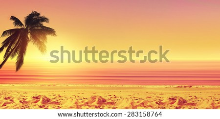 Coconut palm tree and sunset ocean beach. Tropical paradise. Panoramic view. - stock photo