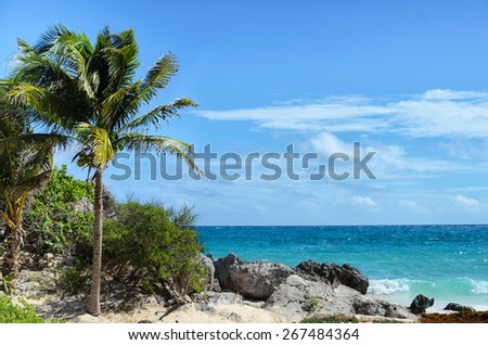 Coconut palm tree at rocky white sand beach on a windy day - stock photo