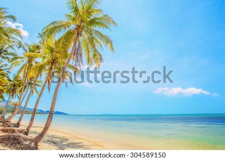 Coconut palm tree at tropical beach Koh samui, Thailand - stock photo