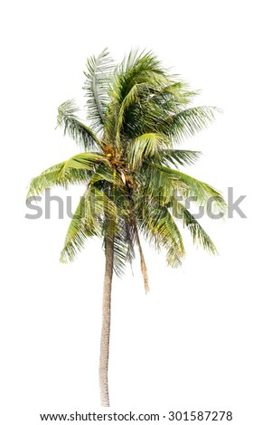 Coconut palm tree, Coco green leaves isolated on over white background