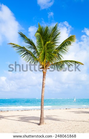 Coconut palm tree growing on a sandy beach. Coast of Atlantic ocean, Dominican republic