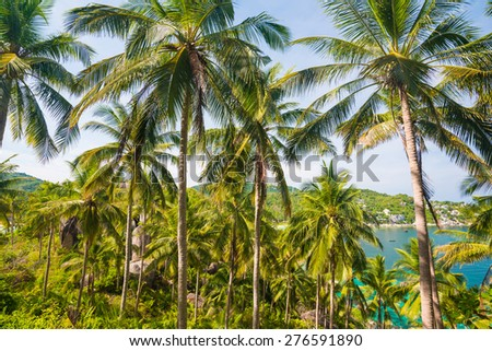 Coconut palm tree in island, view from mountain - stock photo