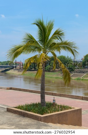 Coconut Palm tree in park,Thailand - stock photo