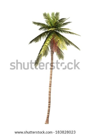 coconut palm tree isolated 2