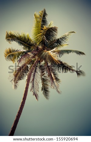Coconut palm tree isolated over tropical sky. Image in vintage style. India - stock photo
