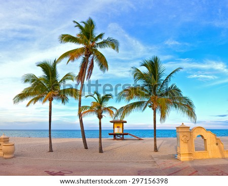 Coconut palm tree on a beautiful sunny summer afternoon in Hollywood Beach near Miami Florida with ocean and blue sky in the background - stock photo