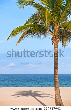 Coconut palm tree on a beautiful sunny summer afternoon in Miami Beach Florida with ocean and blue sky in the background
