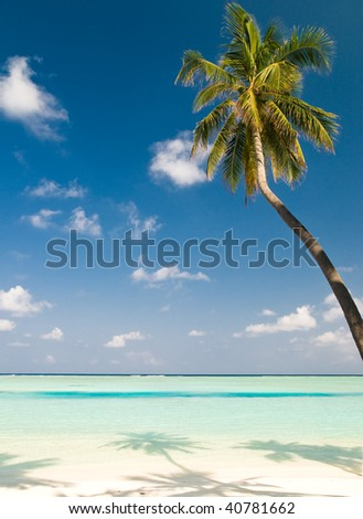 coconut palm tree on an unspoilt beach