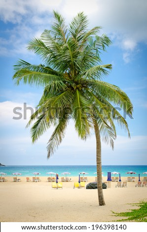 Coconut palm tree on the beach with blue sky in Phuket, Thailand