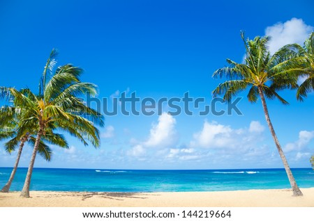 Coconut Palm tree on the sandy beach in Hawaii, Kauai - stock photo