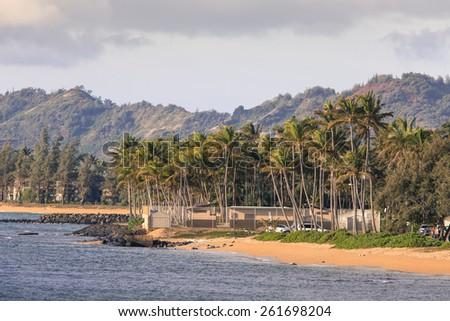 Coconut Palm tree on the sandy beach in Hawaii, Kauai - stock photo