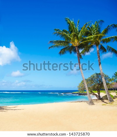 Coconut Palm tree on the sandy Poipu beach in Hawaii, Kauai - stock photo