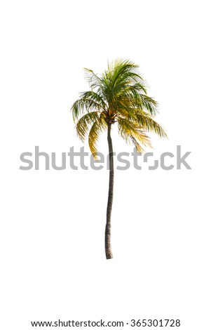 Coconut palm tree on white isolated background with clipping path. - stock photo