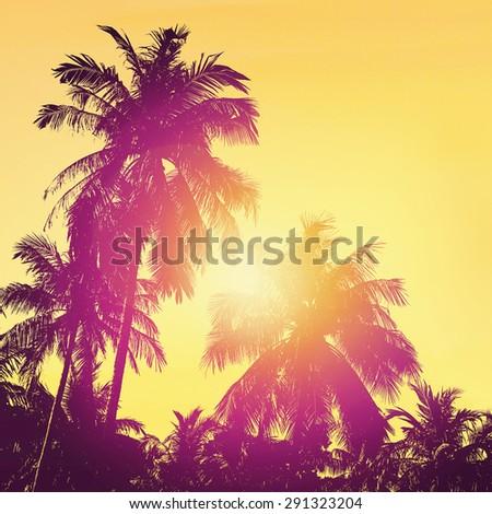 Coconut palm tree silhoette. Tropical beach landscape. Summer, holidays, ocean. - stock photo