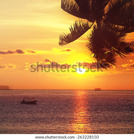 Coconut palm tree silhouette over the sea. Tropical beach background. - stock photo