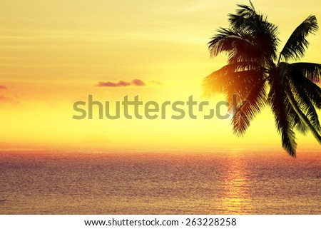 Coconut palm tree silhouette over the sea. Tropical beach background.