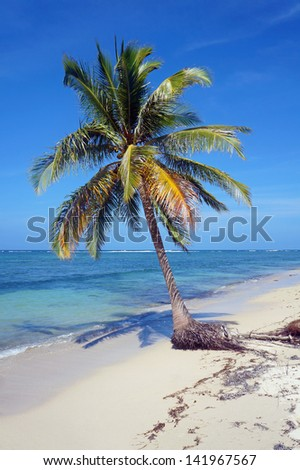 Coconut palm tree standing alone on a sandy beach with blue sky and sea