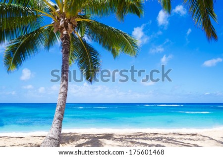 Coconut Palm tree with beach chair on the sandy Poipu beach in Hawaii, Kauai