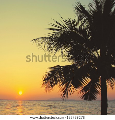 Coconut palm tree with sunrise and retro filter effect  - stock photo