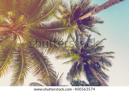 Coconut palm tree with vintage effect. - stock photo