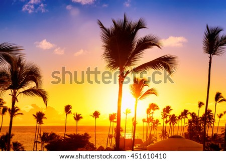 Coconut palm trees against colorful sunset  - stock photo