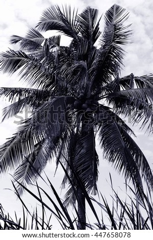Coconut palm trees against sky  - stock photo