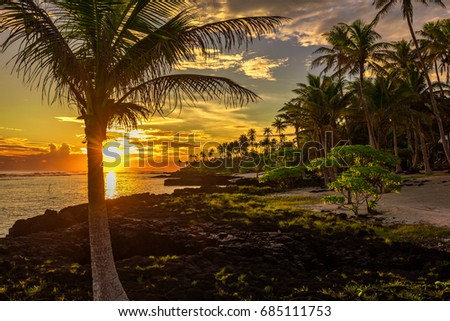 Coconut palm trees and black rocks on the beach during the sunset on Upolu, Samoa Islands