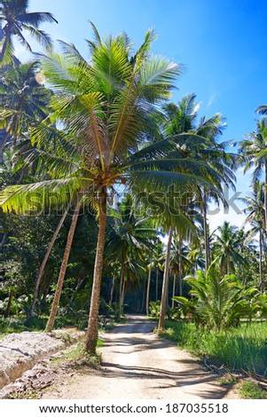 Coconut palm trees and road in the jungle - stock photo
