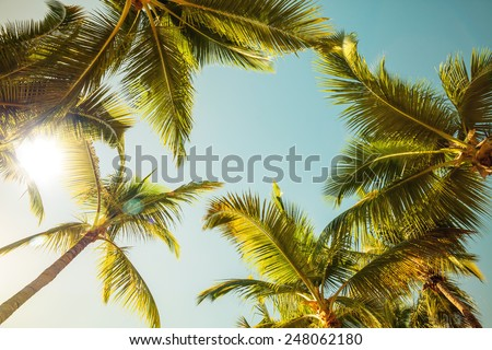 Coconut palm trees and shining sun over bright sky background. Vintage style. Toned photo with instagram filter - stock photo
